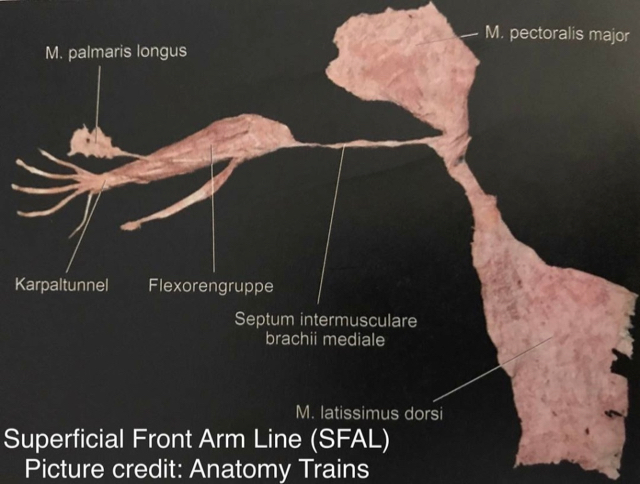 Superficial front line anatomy trains